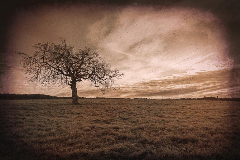 Baum Vintage Nachher