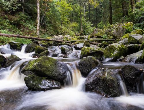 Ein kleiner Streifzug durch den Hochschwarzwald