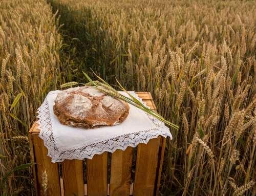 Brotlaib im Kornfeld