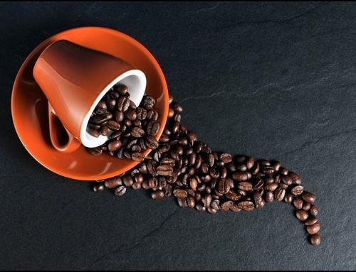 Kopi Luwak – exklusiver Kaffeegenuss